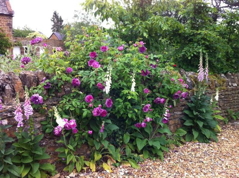 Garden design oxfordshire link bow landscape design for Garden design oxfordshire