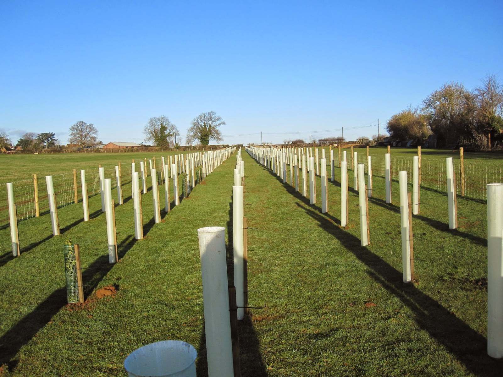 HS2_screening_woodland_belt_screen_planting_fencing_guards_shelter_net_hewly_planted_farmland