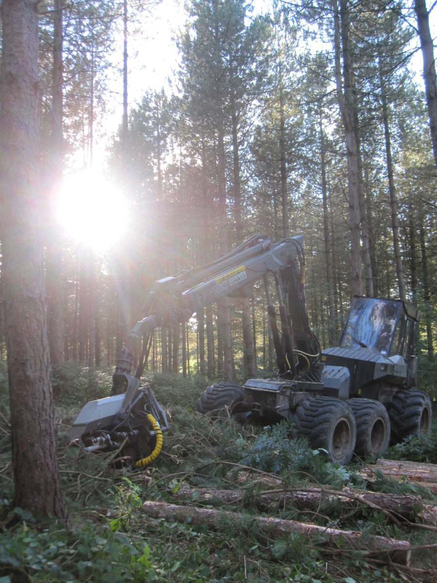 tree_thinning_timber_harvesting_wood_for_sale_processing