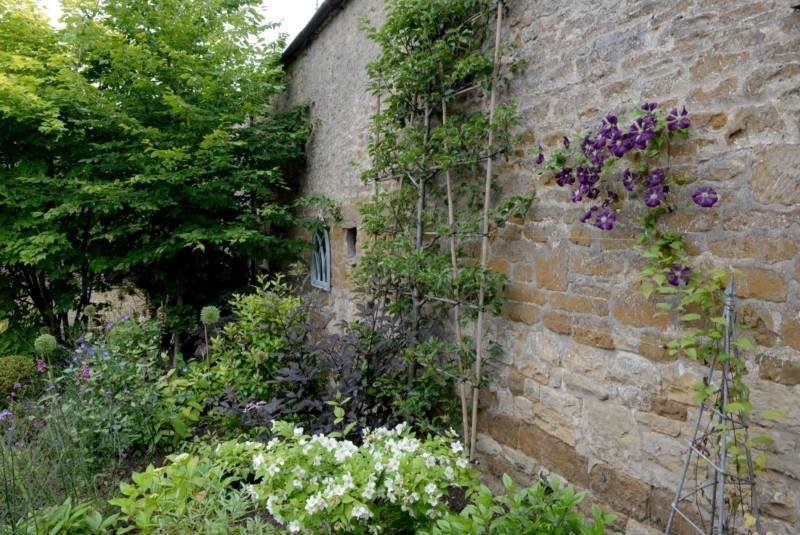Planted border with climbing clematis and espaliered pear