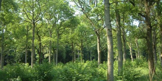 The Coppice Woodland 2
