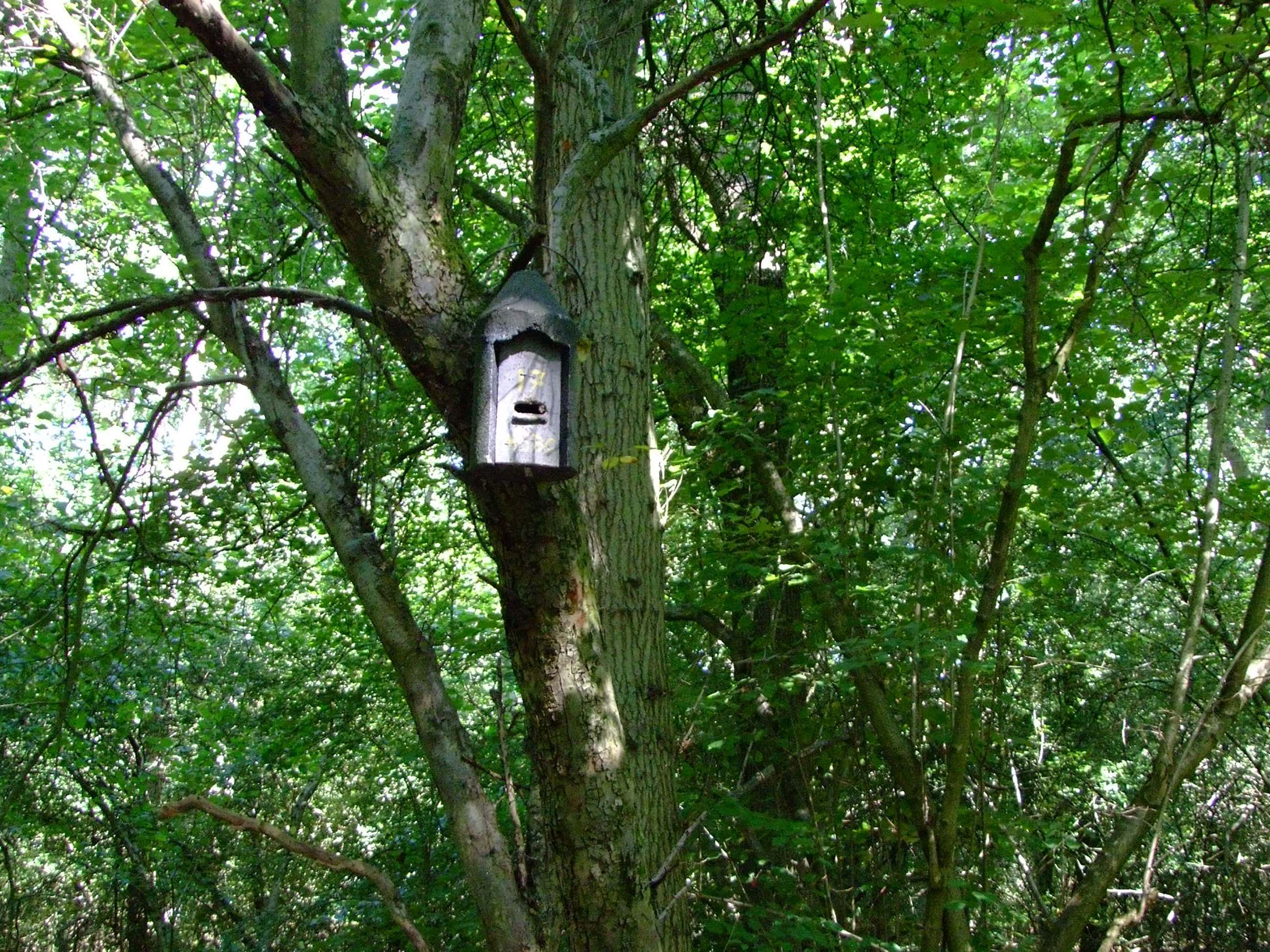 BS8596 - Surveying for Bats in Woodland