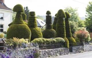 "The sculpted hedges in the garden of a house on Old Coach Road in Cross, Somerset which are raising eyebrows in the village.  See SWNS story SWHEDGE; A home in Frankie Howerd's former village is causing a titter with these hedges - that look like giant PENISES. The large phallus-shaped plants have been created using topiary skills in Cross, near Axbridge in Somerset. They were spotted in a front garden by walker Nigel Vile - looming over the Mendip Hills south of Bristol and Bath in Somerset. He shared them on Facebook where they caused a bit of a sensation. His picture was captioned: ""Some fallacious topiary?"""