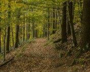 Forestry Wisdom