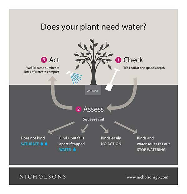 Does Your Plant Need Water