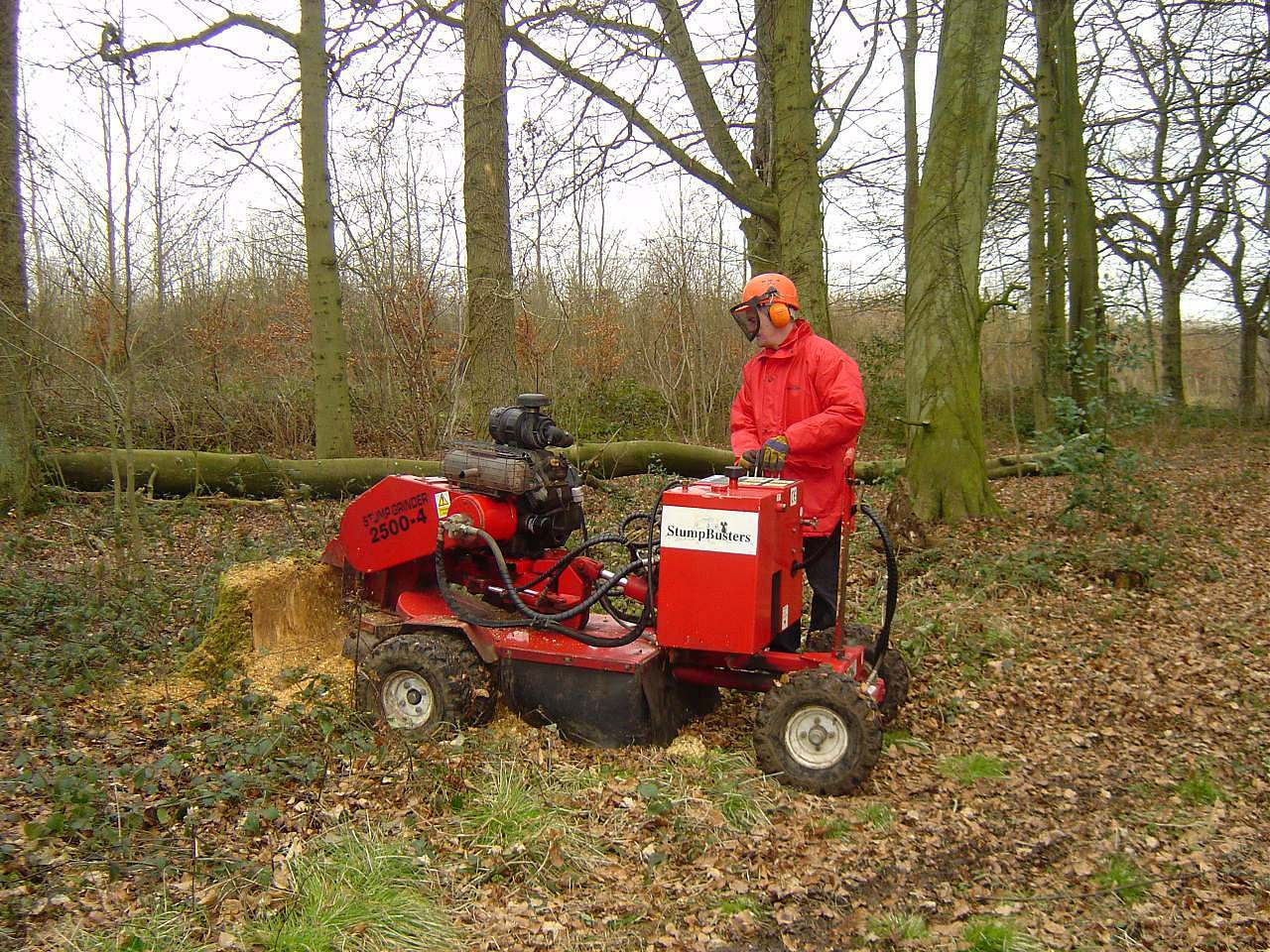 tree_stump_grinding_clear_site_for_replanting