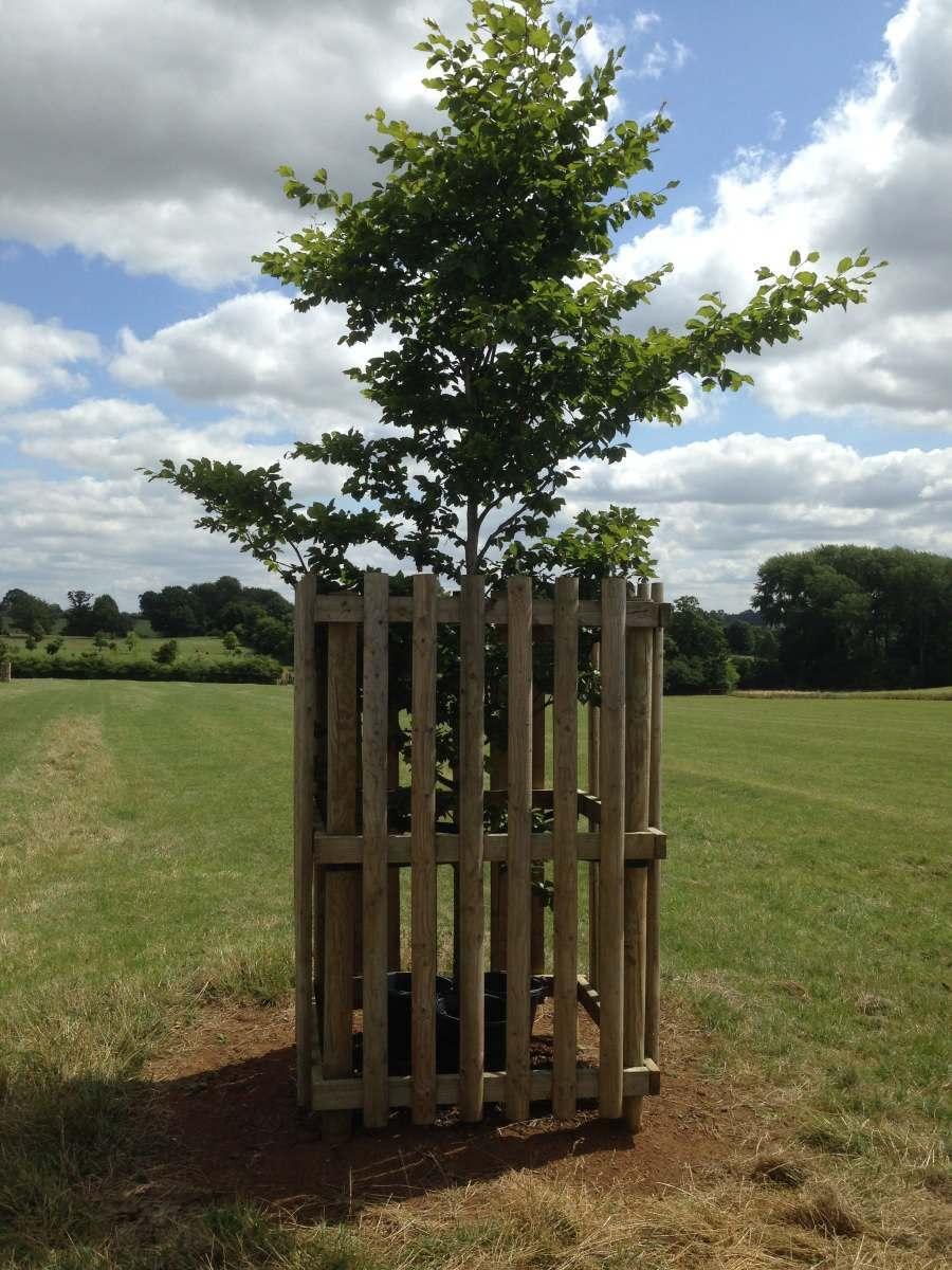 parkland_tree_guard_horse_cattle_deer_proof