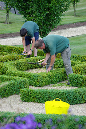 box_hedge_buxus_maintenance_gardening_clipping_hedging_parterre_knot_garden