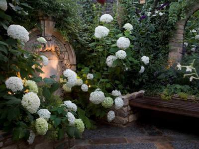 Plants for Shady Gardens