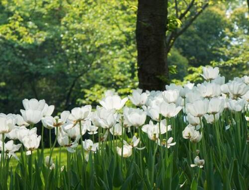 Woodland Inspired Planting
