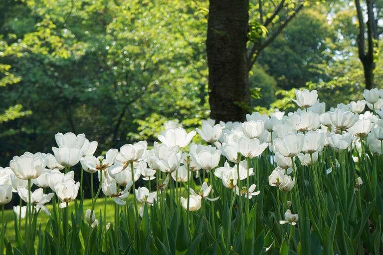 woodland-garden-768x511