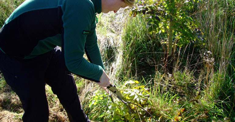 Plant Health Officer taking samples for the Forestry Commission