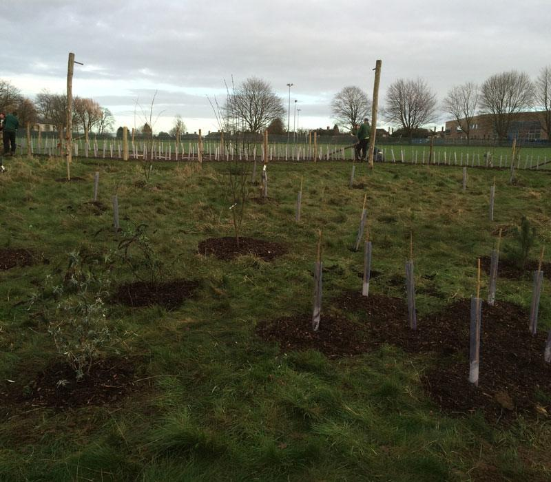 Trees being planted for the new forest school at Rose Hill primary school