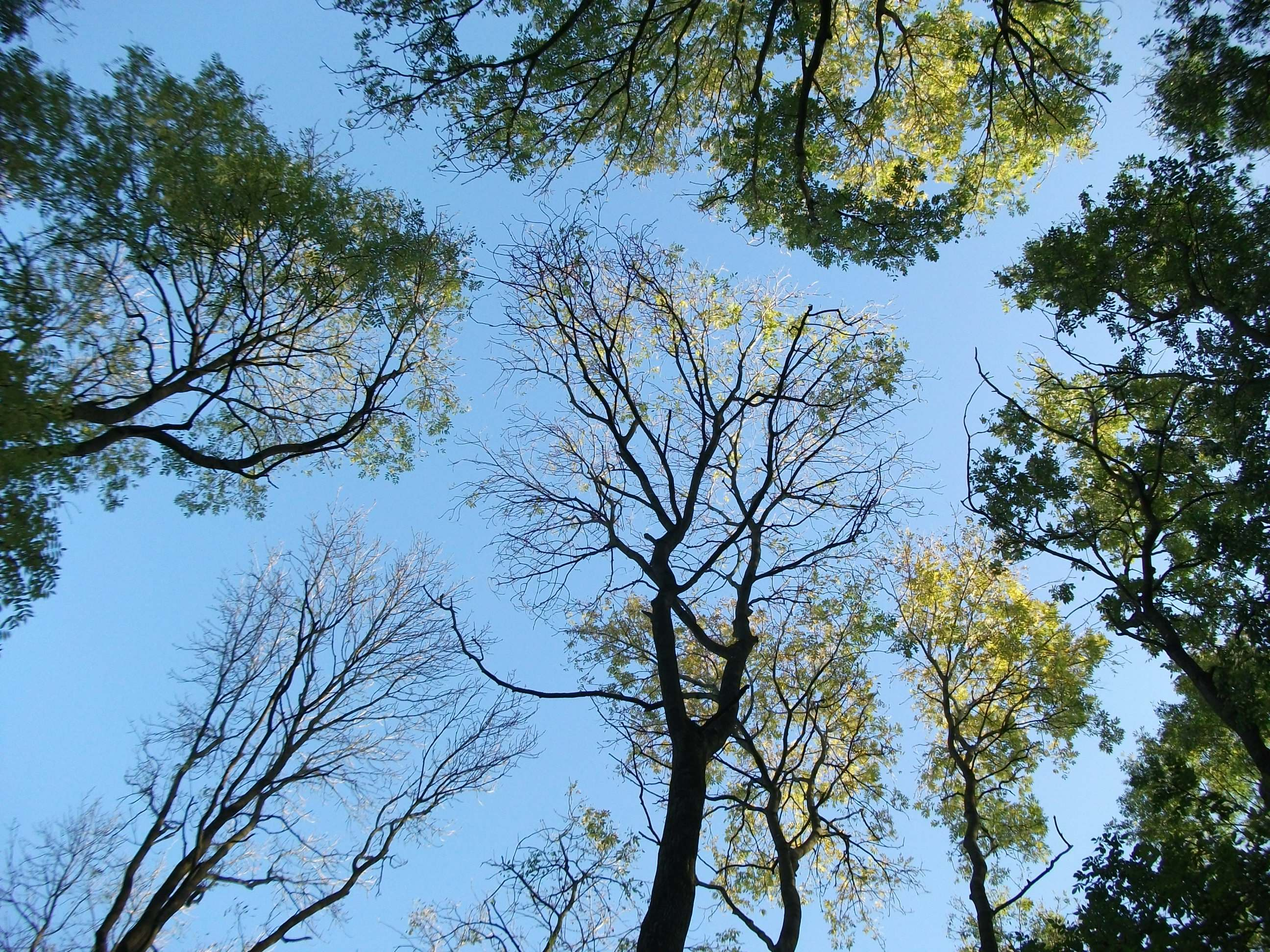 The Diversified Woodland