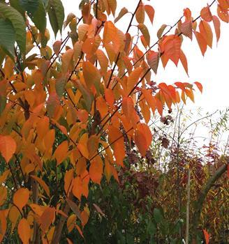 Fill your garden with colour this Autumn