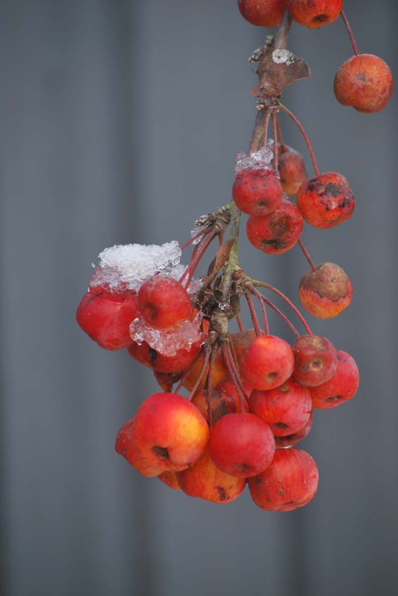 Preparing your Garden for Wildlife this Winter