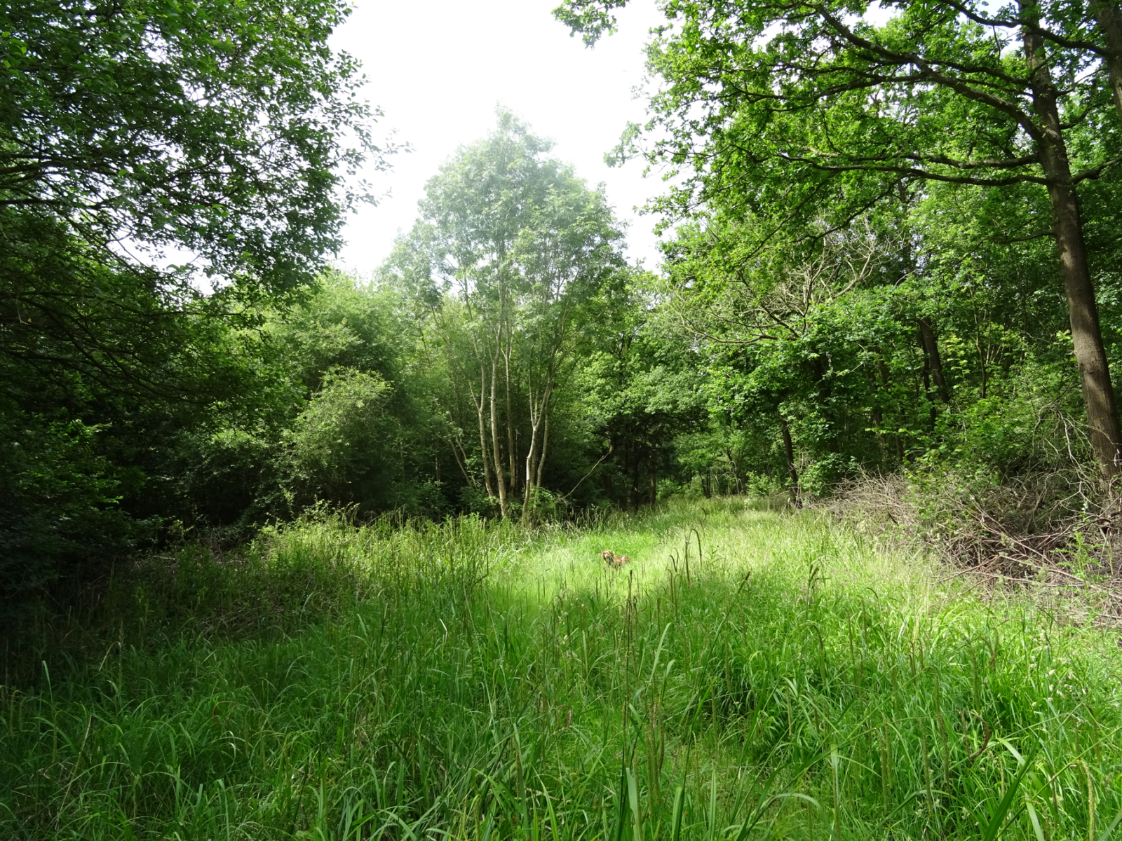 Wicken Wood: General Comments on the Woodland