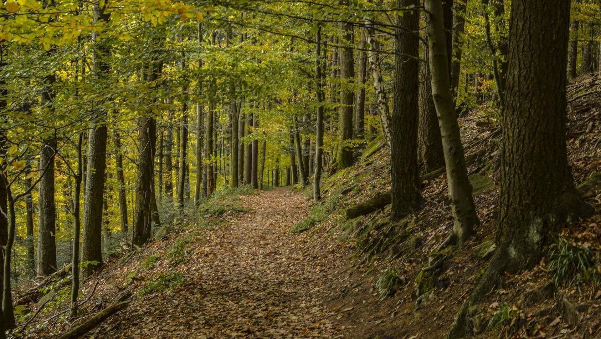Woodland Creation
