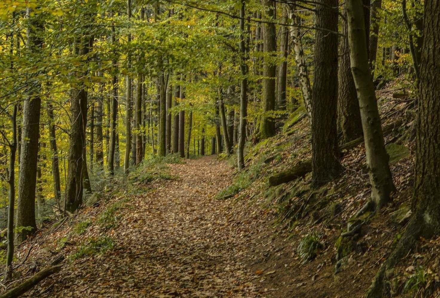 Tree Planting Grants
