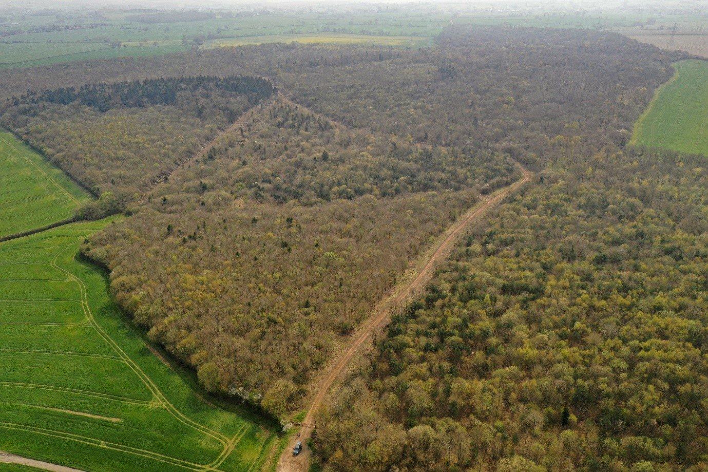 Wicken Wood: Case Study