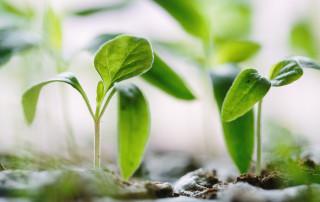 Plant & Design Inspiration