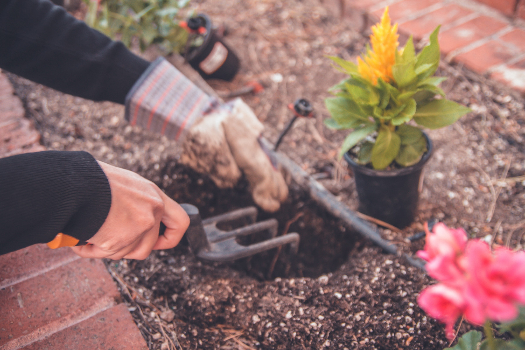 The Positive Effects of Gardening on Our Mental Health
