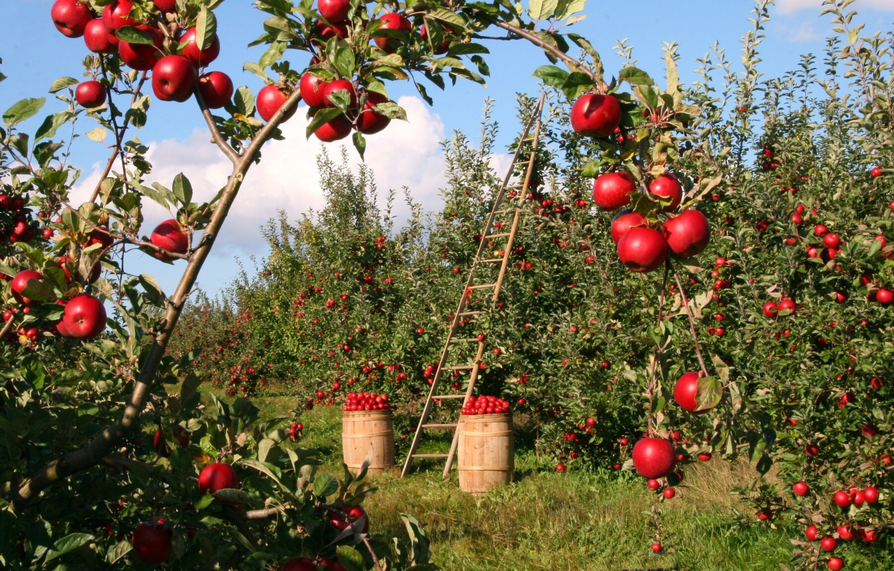 Planting an Orchard