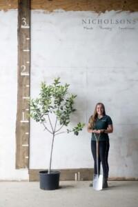 Fruit Trees Gallery