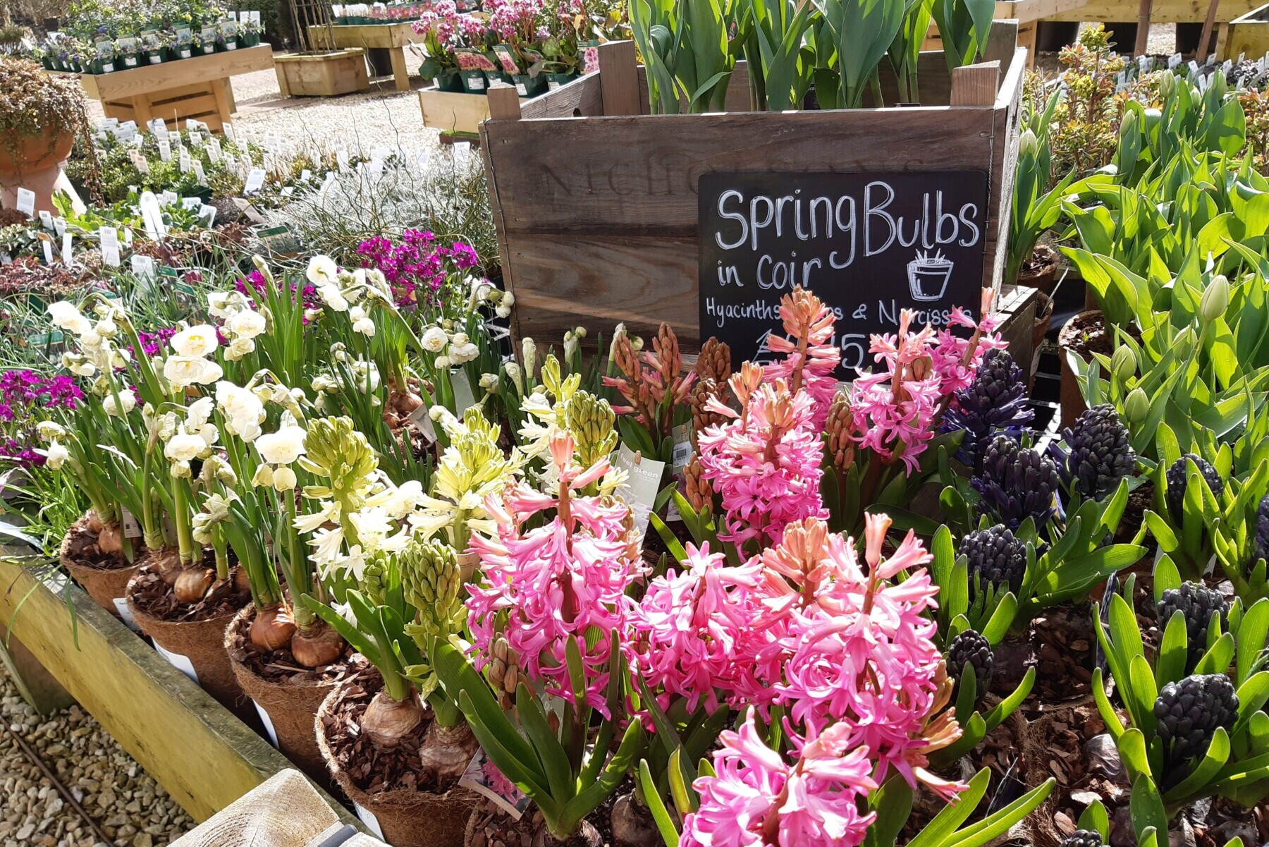 Jobs for the Garden in Early Spring