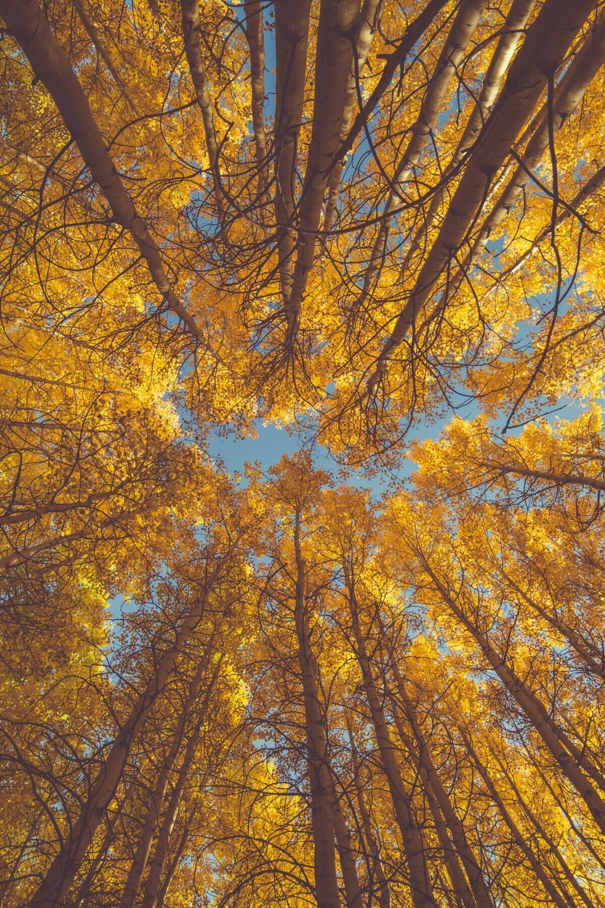 Arboriculture Video