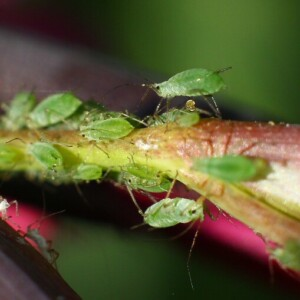 Dealing with Pests in the Garden