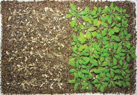 Dealing with Plant Disorders: Non-nutritional Disorders Part 1