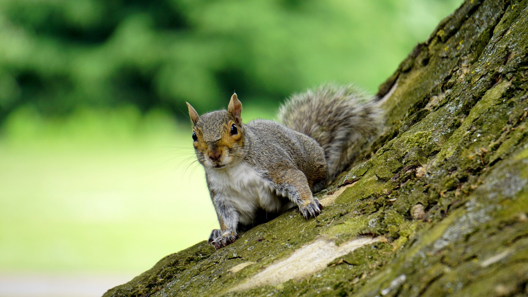 Look out, there's squirrels about...
