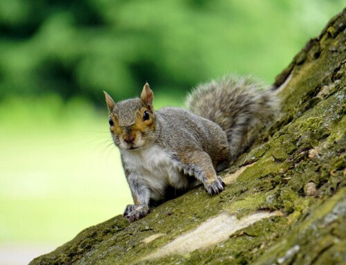 Look out, there's squirrels about…