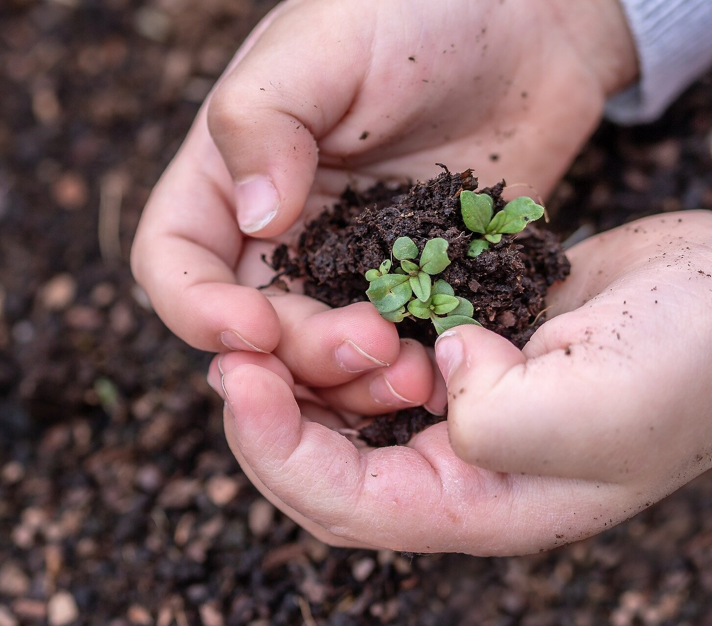 Mental Health, Gardening and Theatre