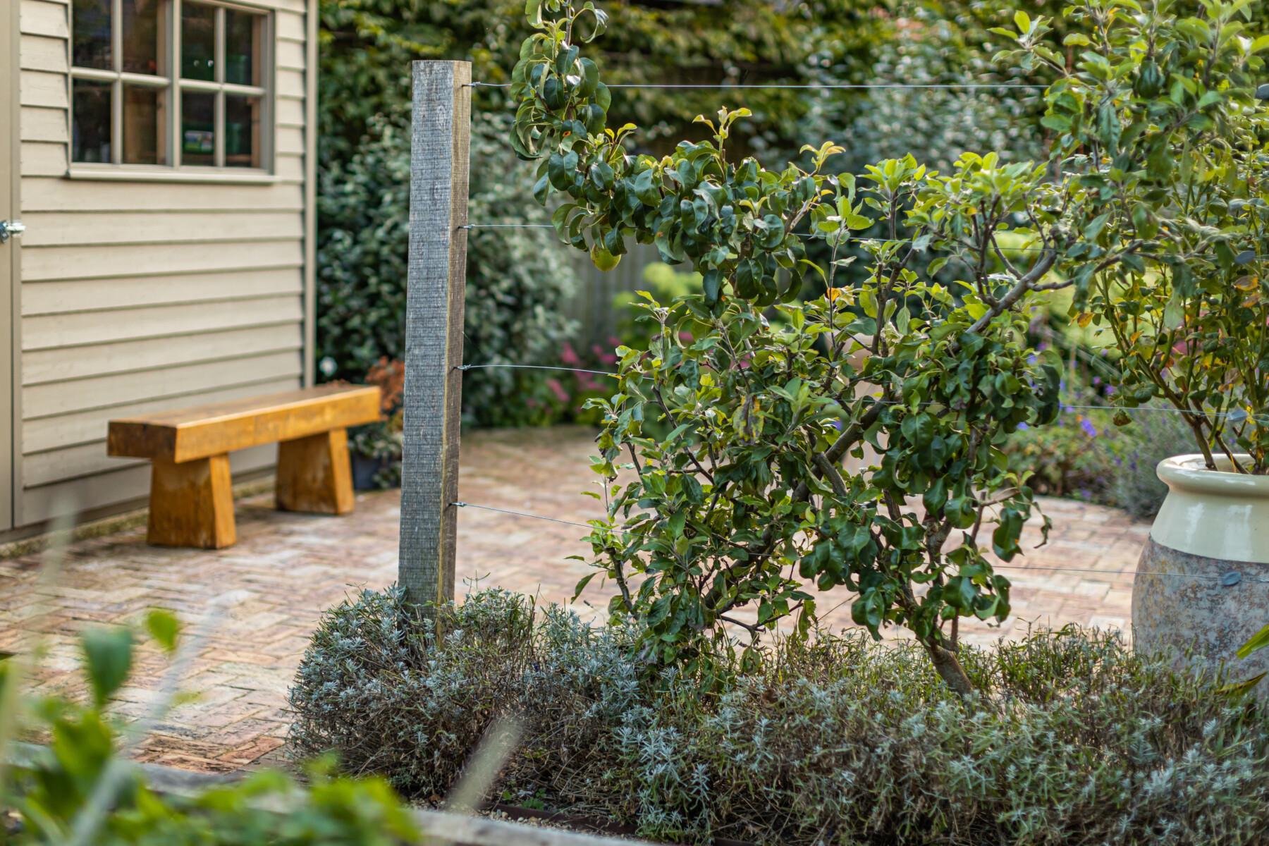The Relaxed Garden