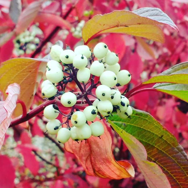 The Role of Berries and Seeds in the Garden and Landscape
