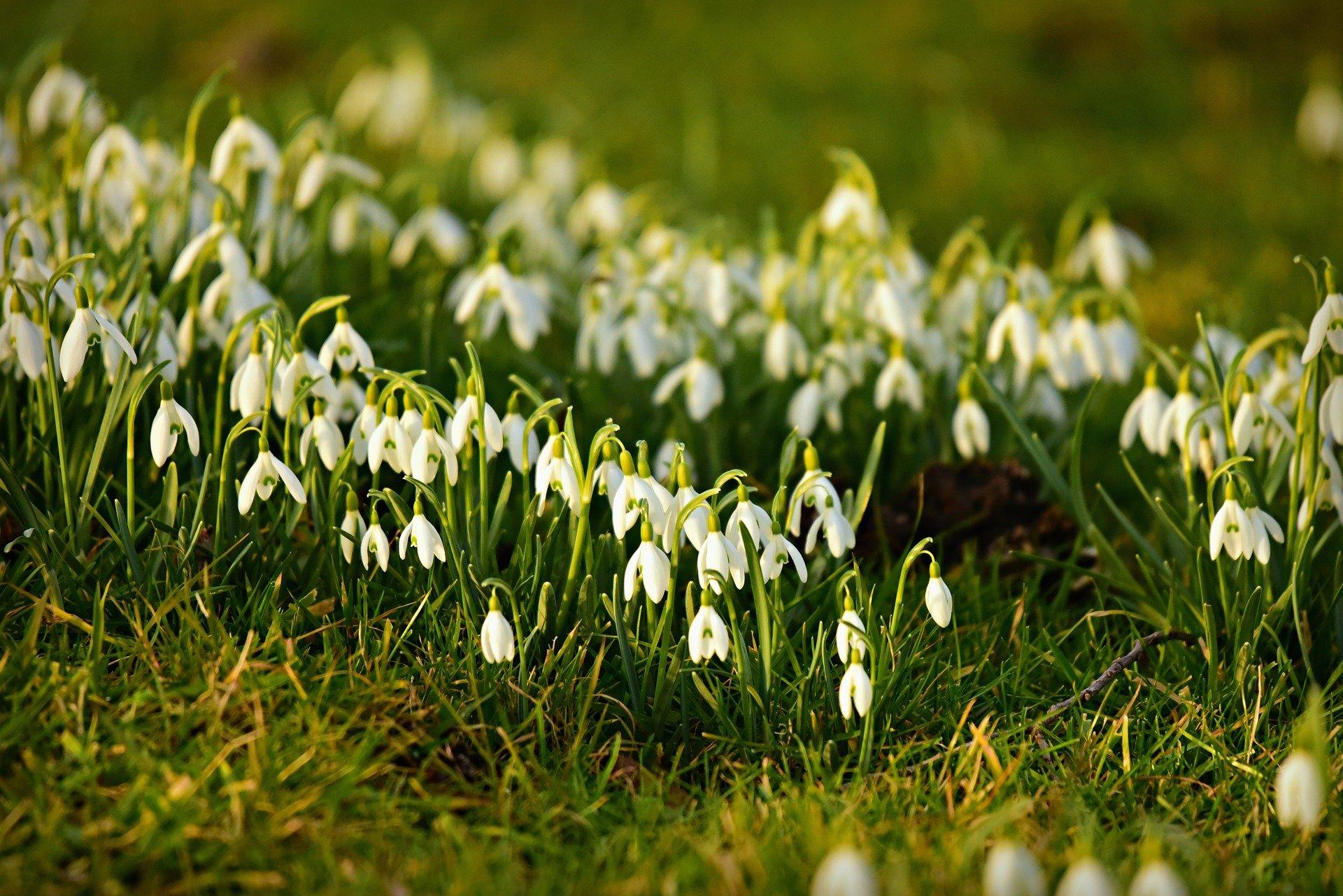 Woodland Wonders: February