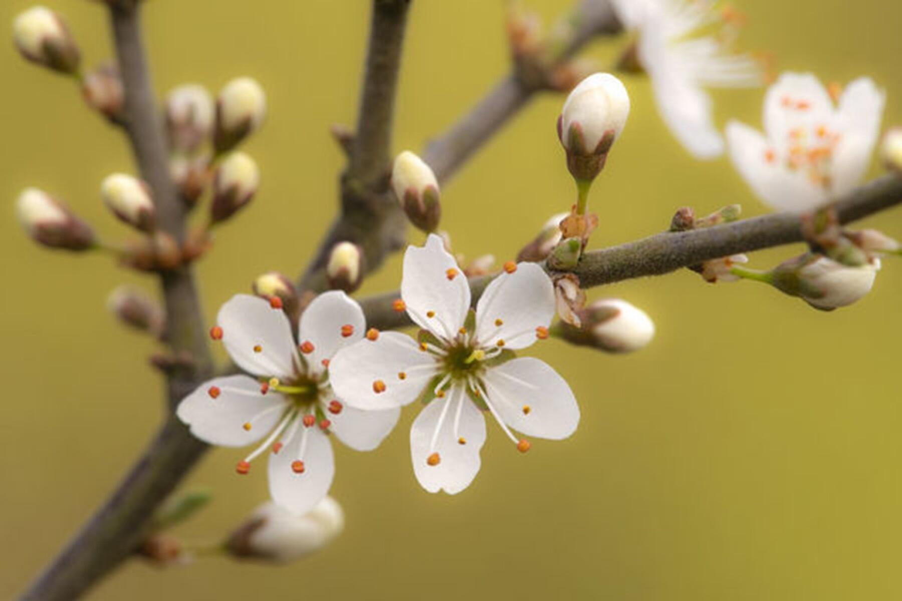 Woodland Wonders: March