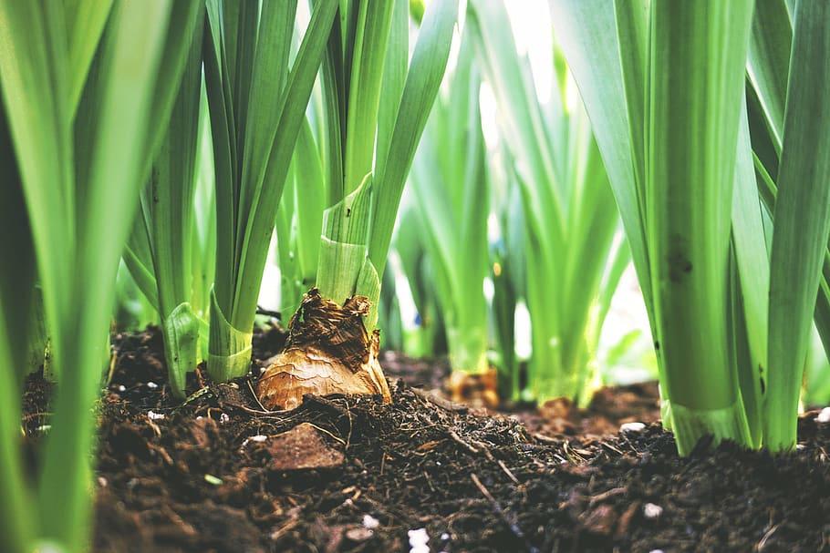 Understanding Soil pH: Recommendations for Soil Types