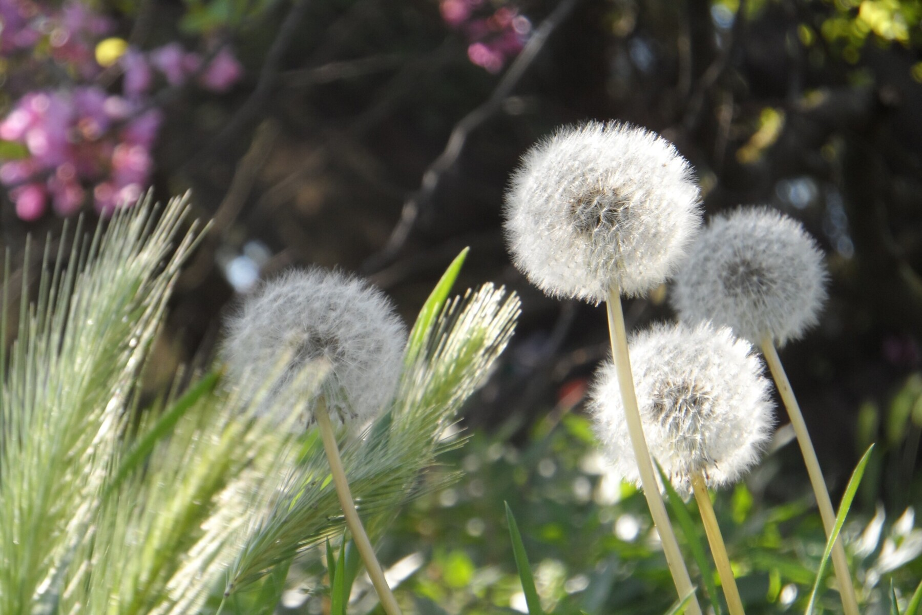 Why We Must Learn to Love Weeds
