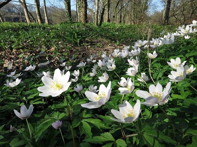 Woodland Wonders: May