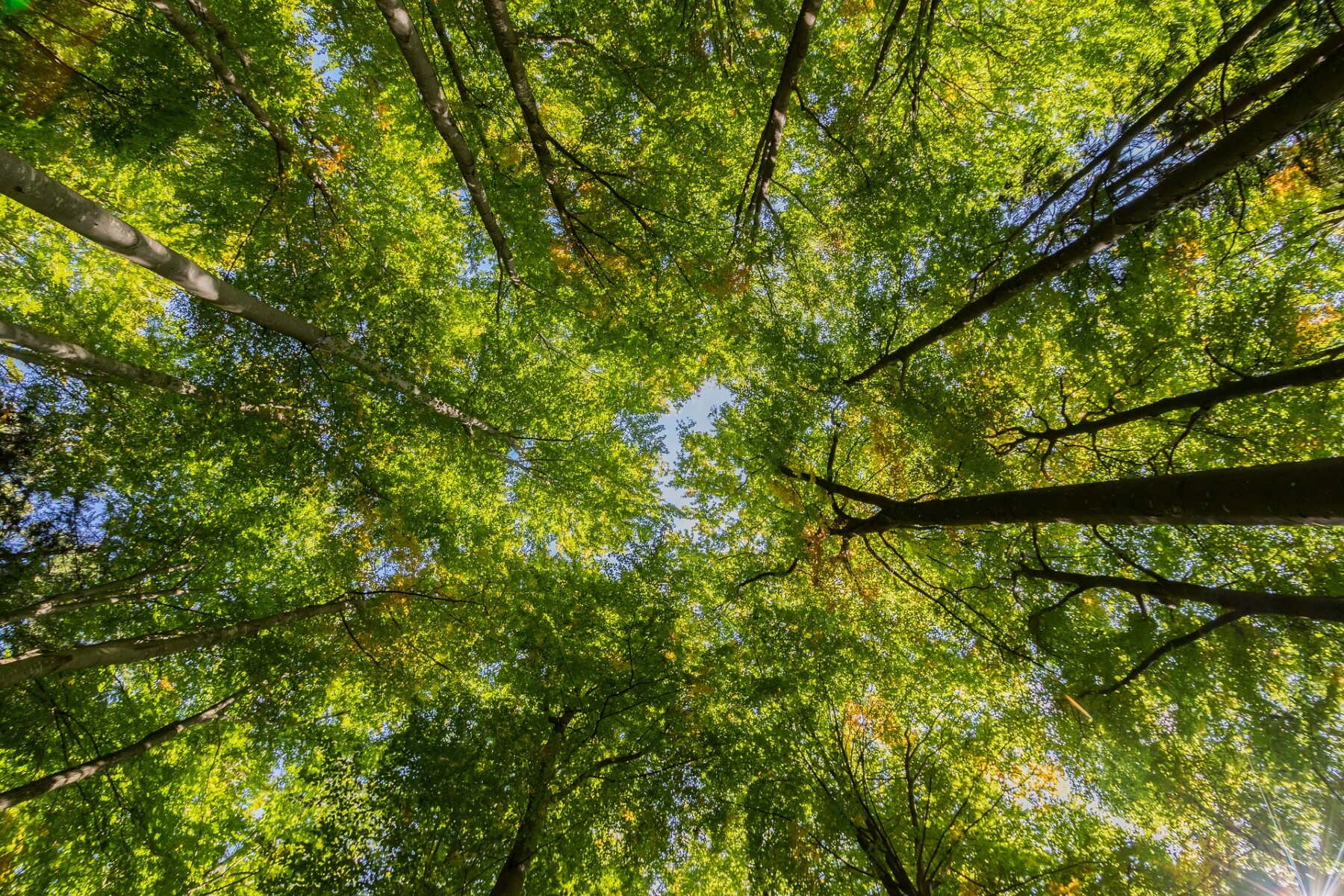 Forest Canopy Foundation