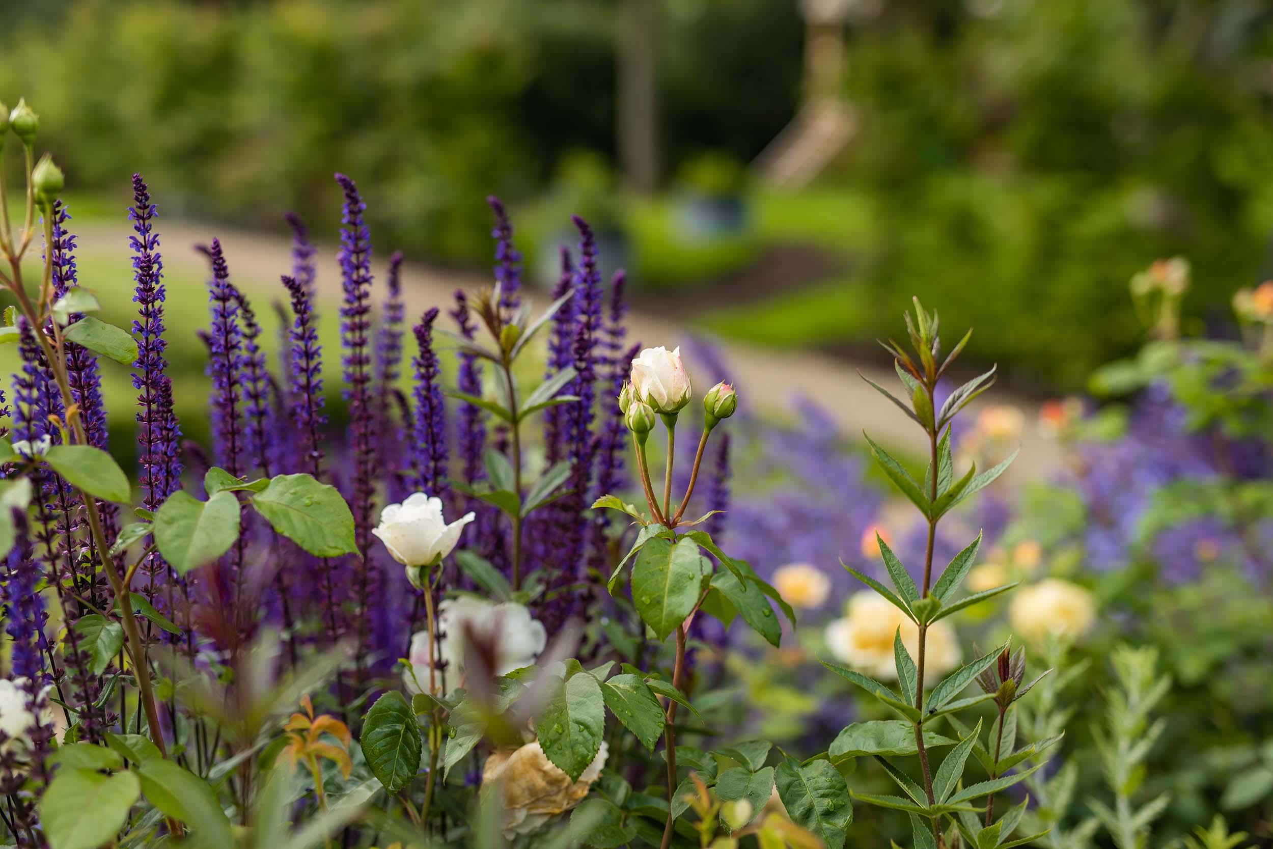Nicholsons Garden - Lockdown For The Grandchildren 2