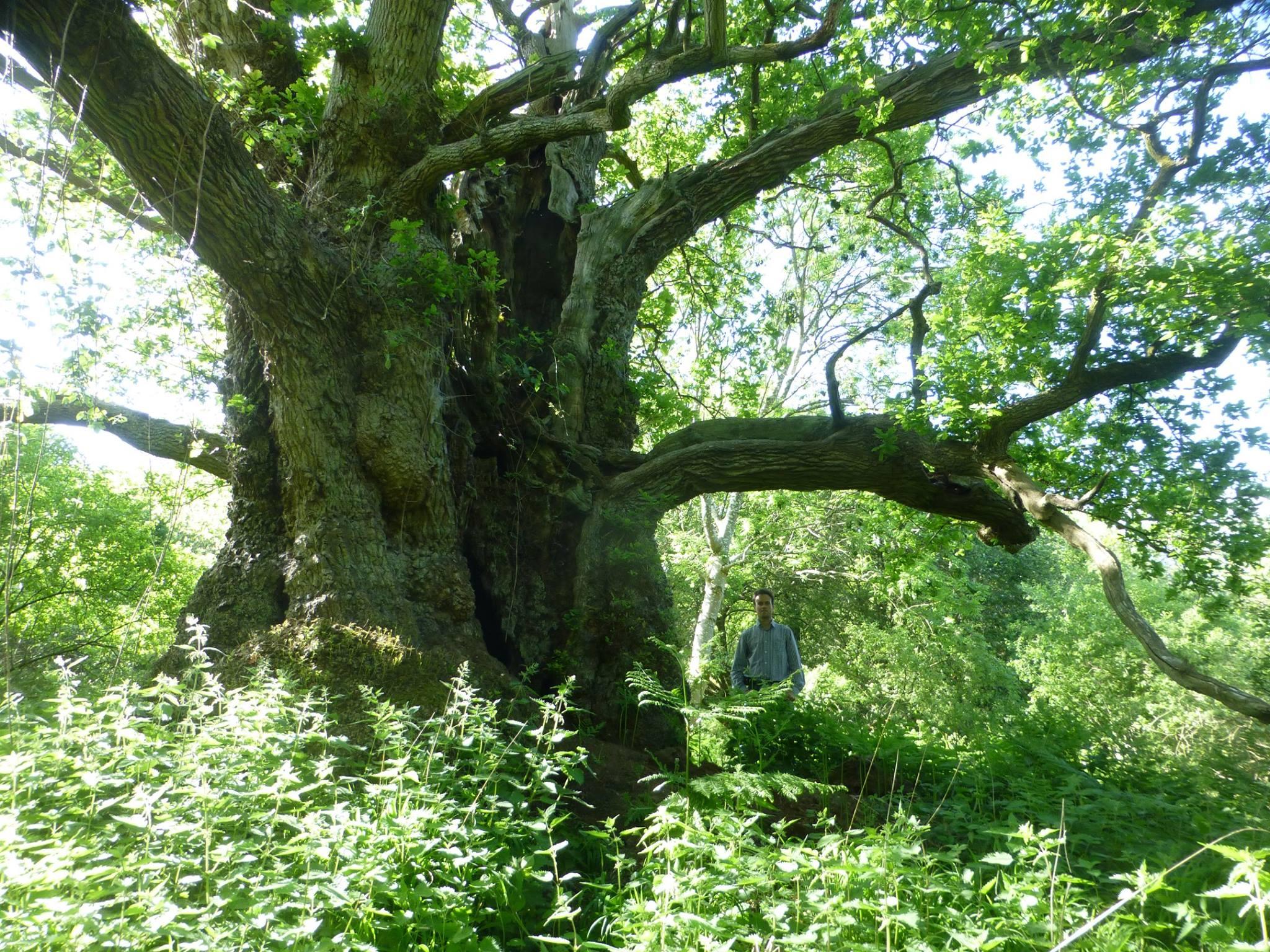 Oxfordshire oak