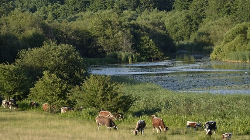 Climate Impacts of Rewilding
