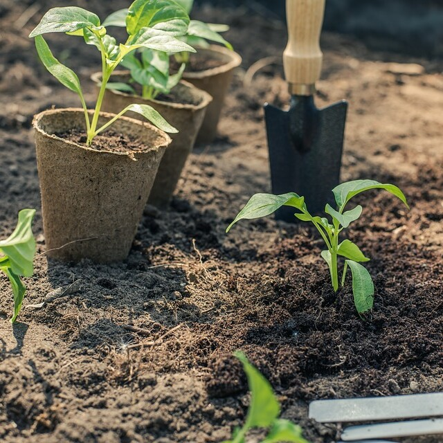 Plant Health and Pest Management