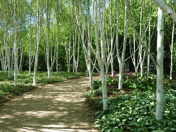 New Season Ornamental Trees Part 2