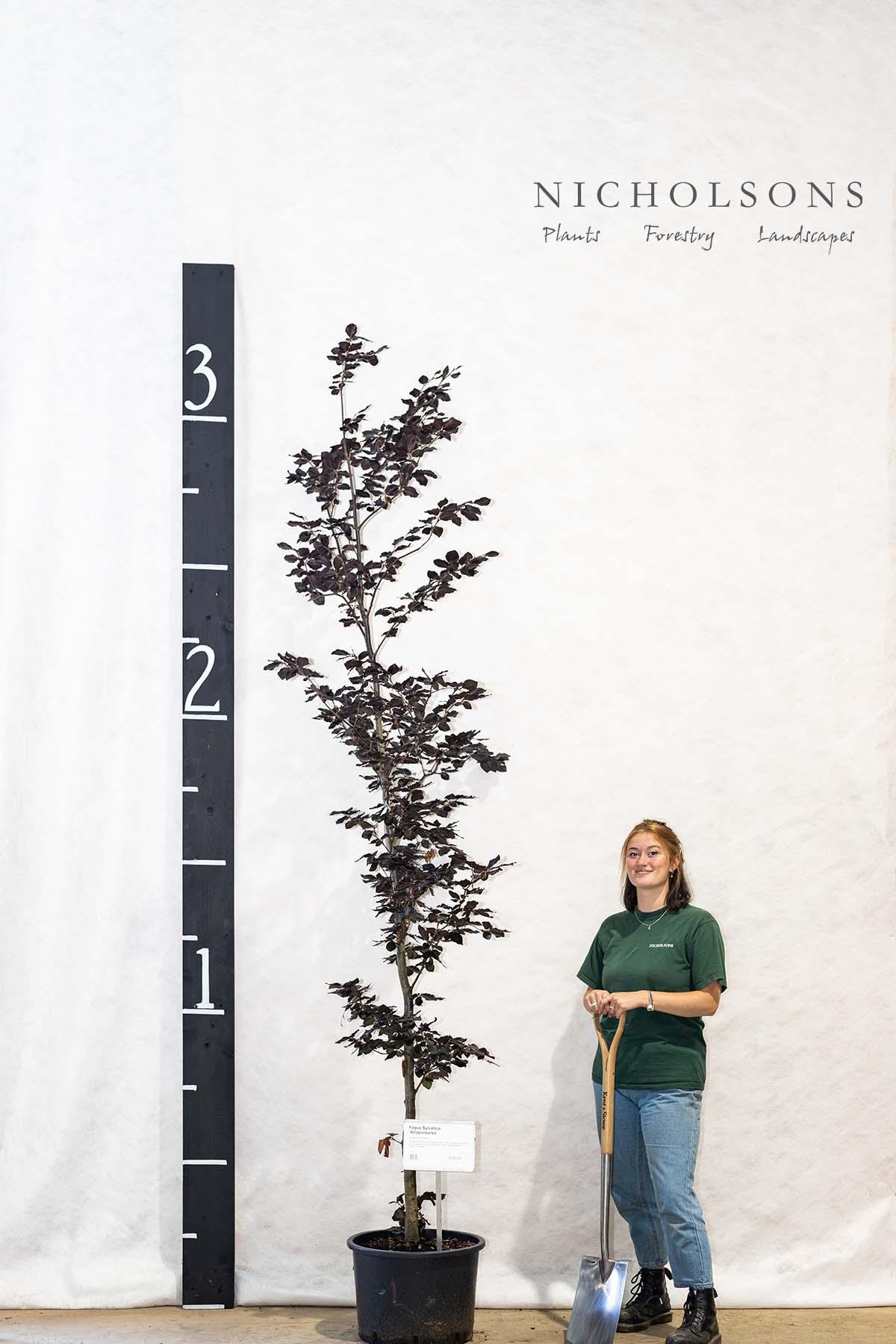 Specimen Trees Gallery