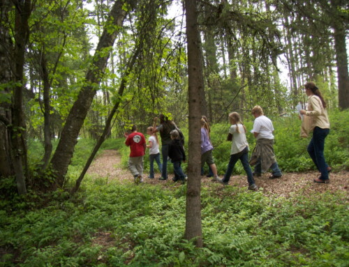The Many Benefits of Forest Schools